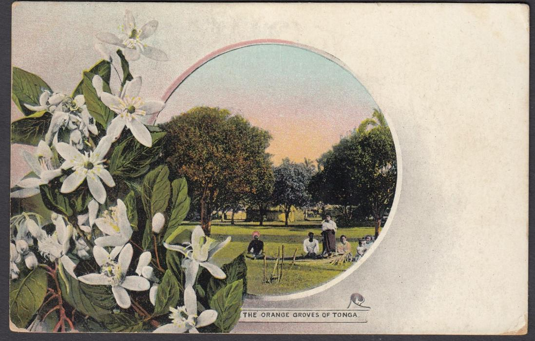 TONGA: (Picture Postal Stationery) 1906 1d. colour picture card The Orange Groves of Tonga, used to Sydney.