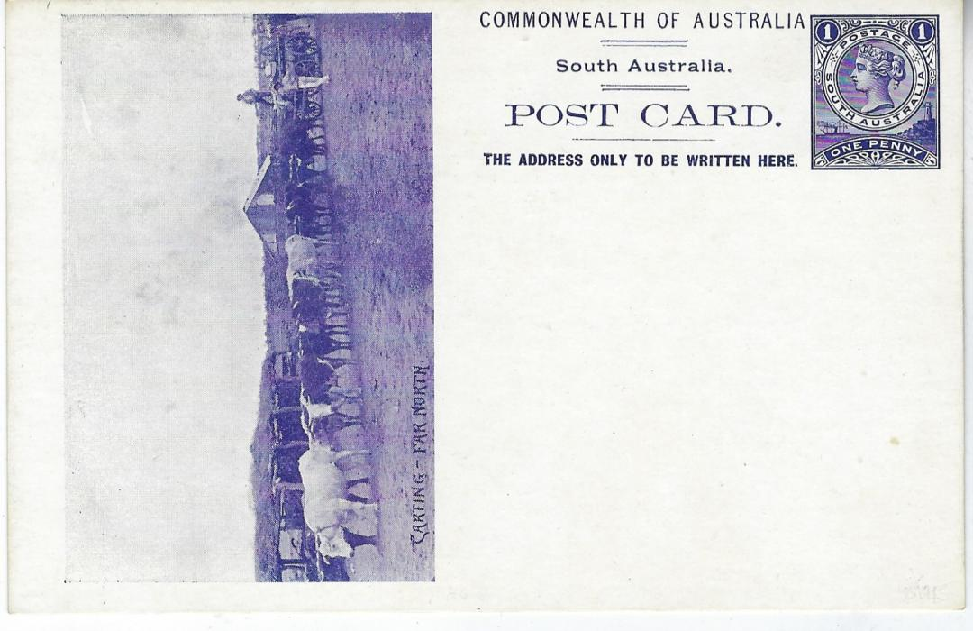 Australia (South – Picture Stationery) 1900s 1d. deep violet stationery card with illustration of twelve team oxen cart entitled 'Carting – Far North', fresh unused