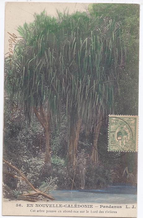 New Caledonia 1906 card Pandanus used to Paris