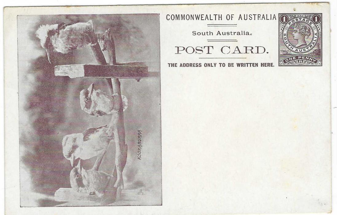 Australian States (South – Picture Stationery)  1900s 1d. dark brown stationery card with illustration of four Kookaburra; some slight toning on reverse and at edges.